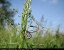 Damselfly at Back Delphin, North Cliffe Carr on 06/06/2007. - © Paul Ashton.