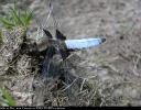 20050626brochamallerthrope1.jpg