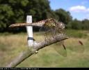 20060825comdarmnthcliffewd1.jpg