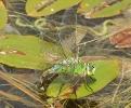 05072011-empdra-female-broomfleetwashlands-paulashton
