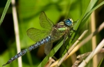 01072011-haidra-male-weltonwaters-barrywarrington
