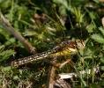 02052011-hardra-female-broomfleetbarrywarrington