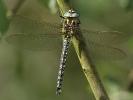 09052011-haidra-male-levencanal-barrywarrington