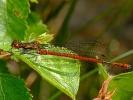 27042011-lardam-male-skipwith-stuartroebuck