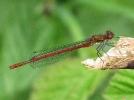 28042011-lardam-male-broomfleet-paulashton