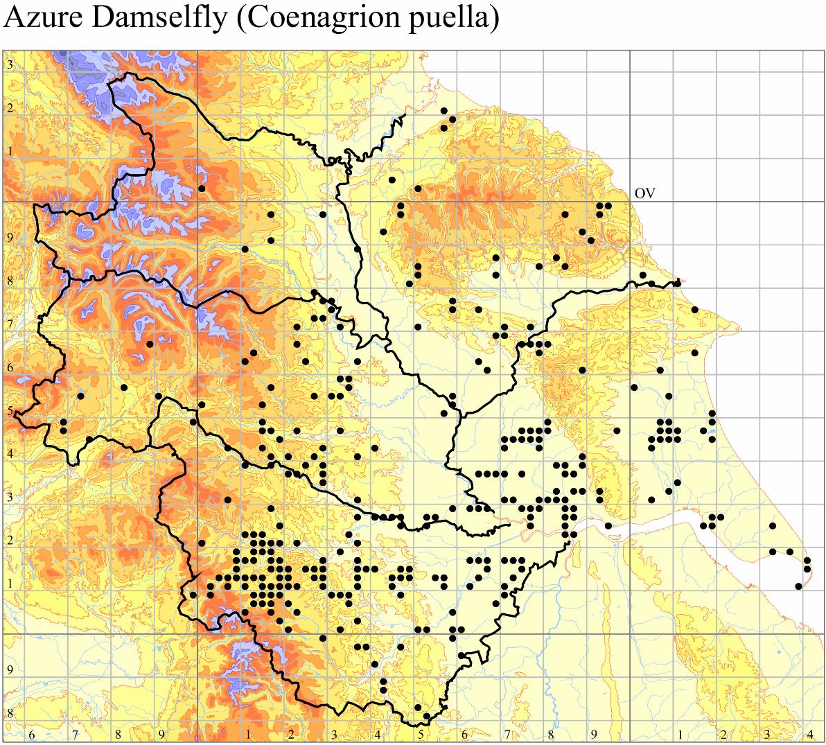 azure-damselfly-coenagrion-puella