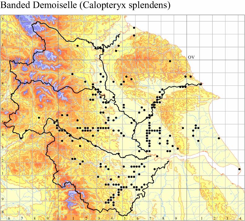 banded-demoiselle-calopteryx-splendens