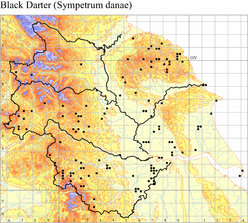 black-darter-sympetrum-danae