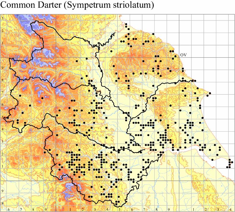 common-darter-sympetrum-striolatum