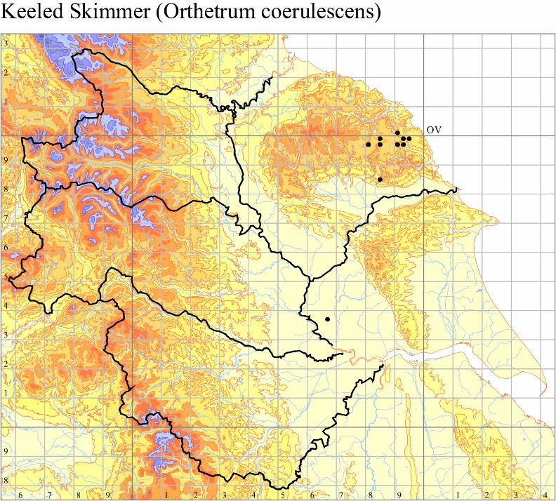 keeled-skimmer-orthetrum-coerulescens