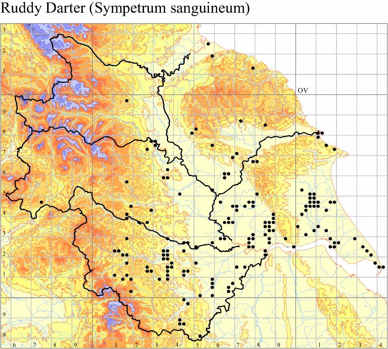 ruddy-darter-sympetrum-sanguineum