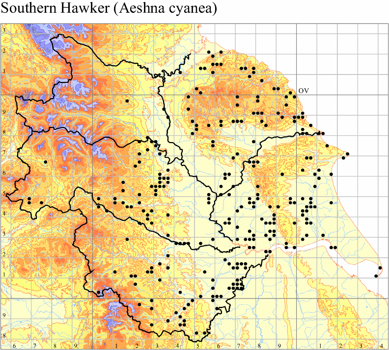 southern-hawker-aeshna-cyanea