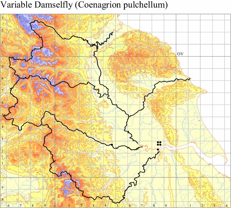 variable-damselfly-coenagrion-pulchellum