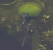 19052011-reddam-pair-broomfleet-barrywarrington